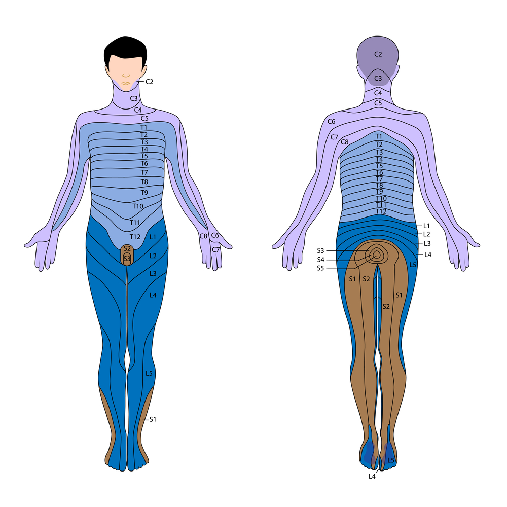 Sciatic Pain Distribution