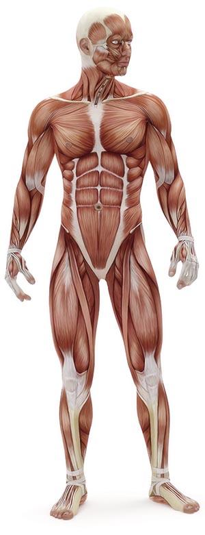 muscle activation swindon