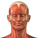 Fascial Muscles for Headache
