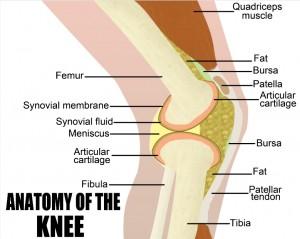 Patella Tendonitis Anatomy