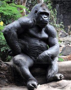 Gorilla Breastroke