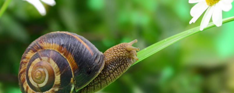 Be More Snail To Be Happier And Feel Less Pain